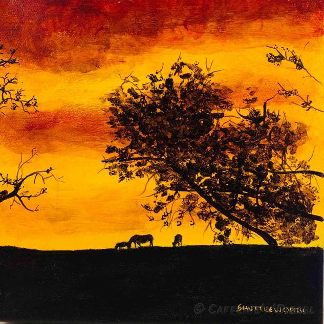 Week 7:  Equus Sunset