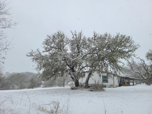 Snow Week