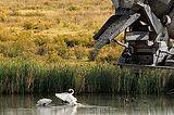 wetland development.jpg