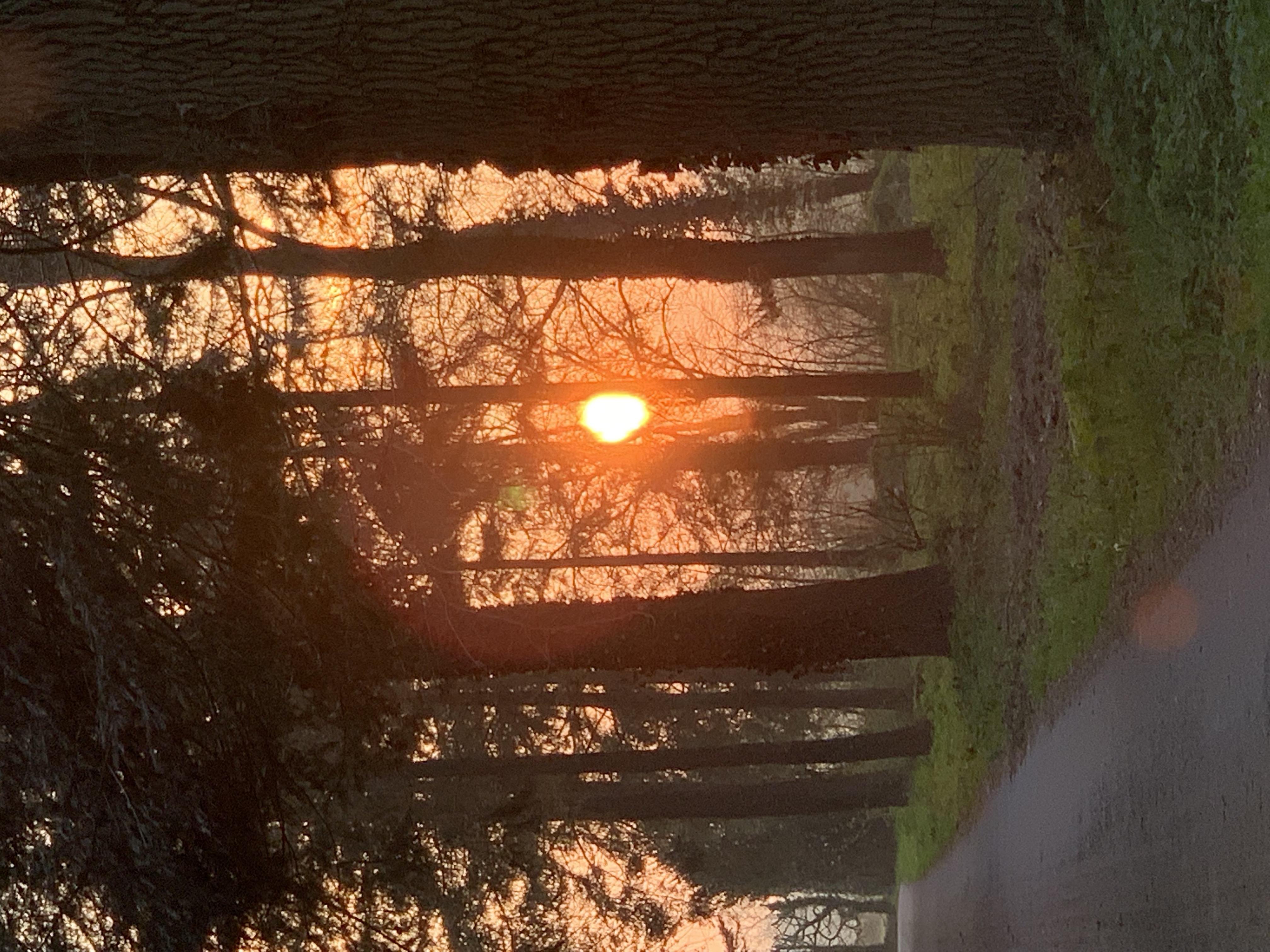 Cleronde wood