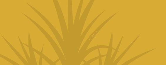 sugarcane copy.jpg