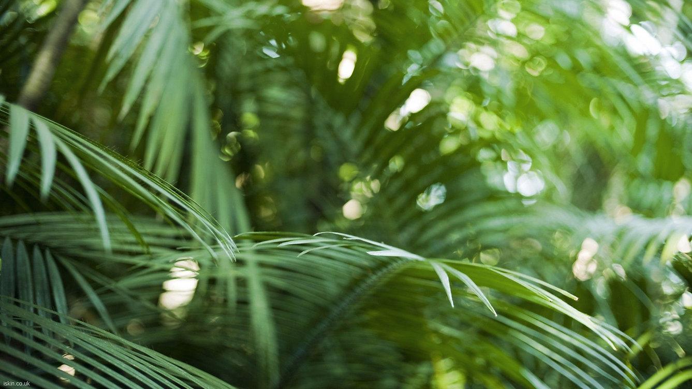 6840788-palm-leaf-wallpaper.jpg