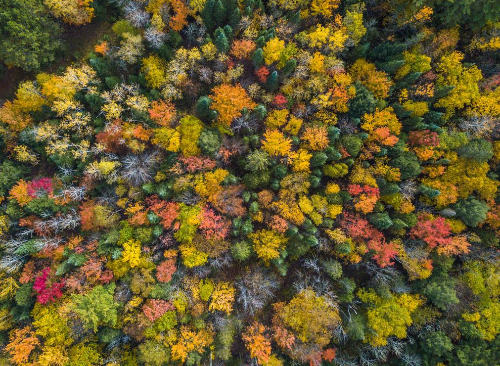 Fall Colors Rapid River