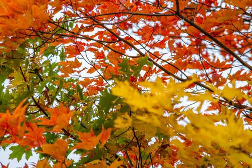 Fall Colors Escanaba