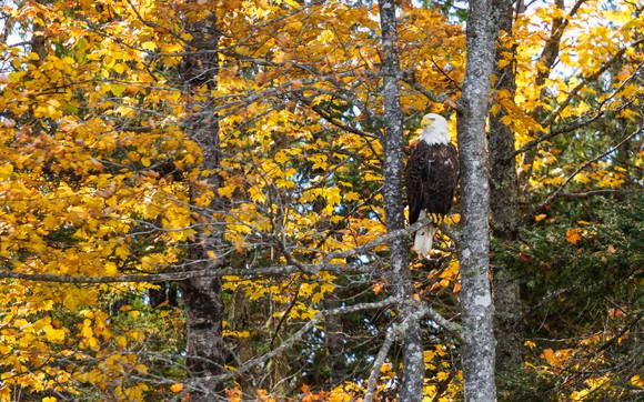 Fall Colors Iron Mountain
