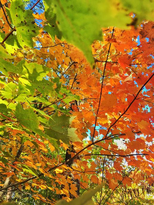 Fall Colors Delta County