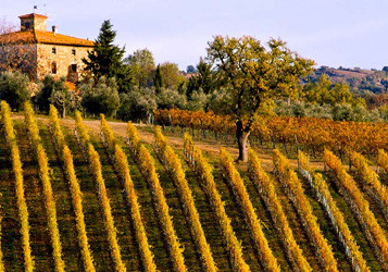 Super-Tuscans