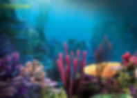 1110822-finding-nemo-backgrounds-1920x10