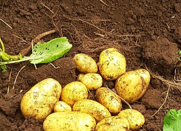 Potatoes 1 kg Agria.