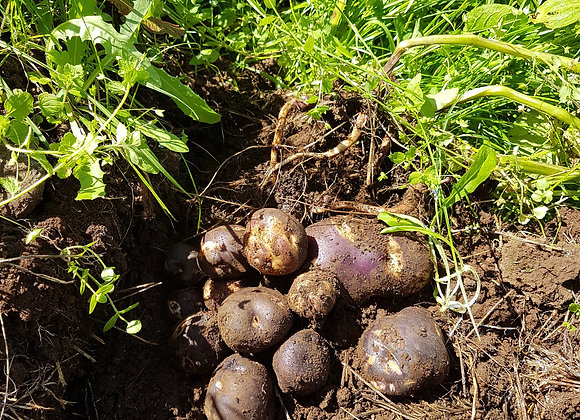 Organic 1 kg Maori potatoes.