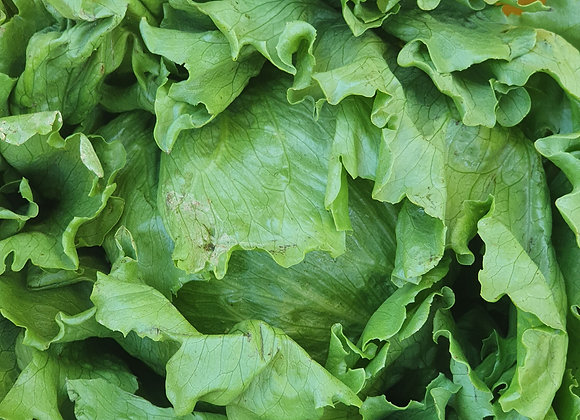 Lettuce ( Iceberg )