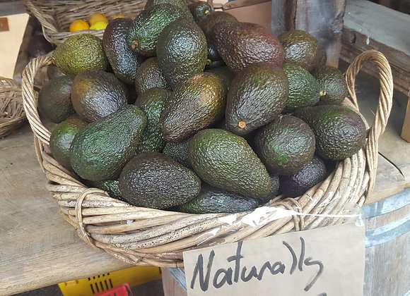 Organic Avocados ( Hass )