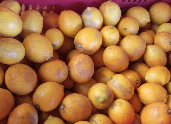 Lemons 600g approx.