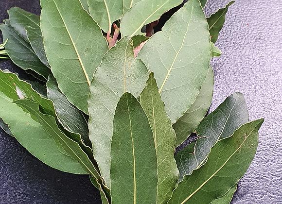 Bay leaf ( bunch ) sprayfree