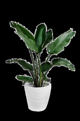 kisspng-arecaceae-plant-leaf-palm-branch