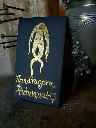 Mandragora Autumnalis Seeds