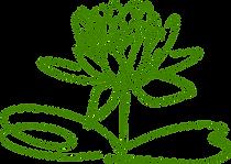 lotus-blossom-304876_1280.png