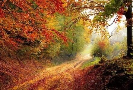 Découvrez la naturopathie | Claire Alcalay - Naturopathe Dijon |