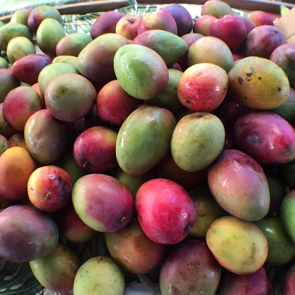 A variety of mangos from one of the many vendors at the Kaka'ako Farmer's Market