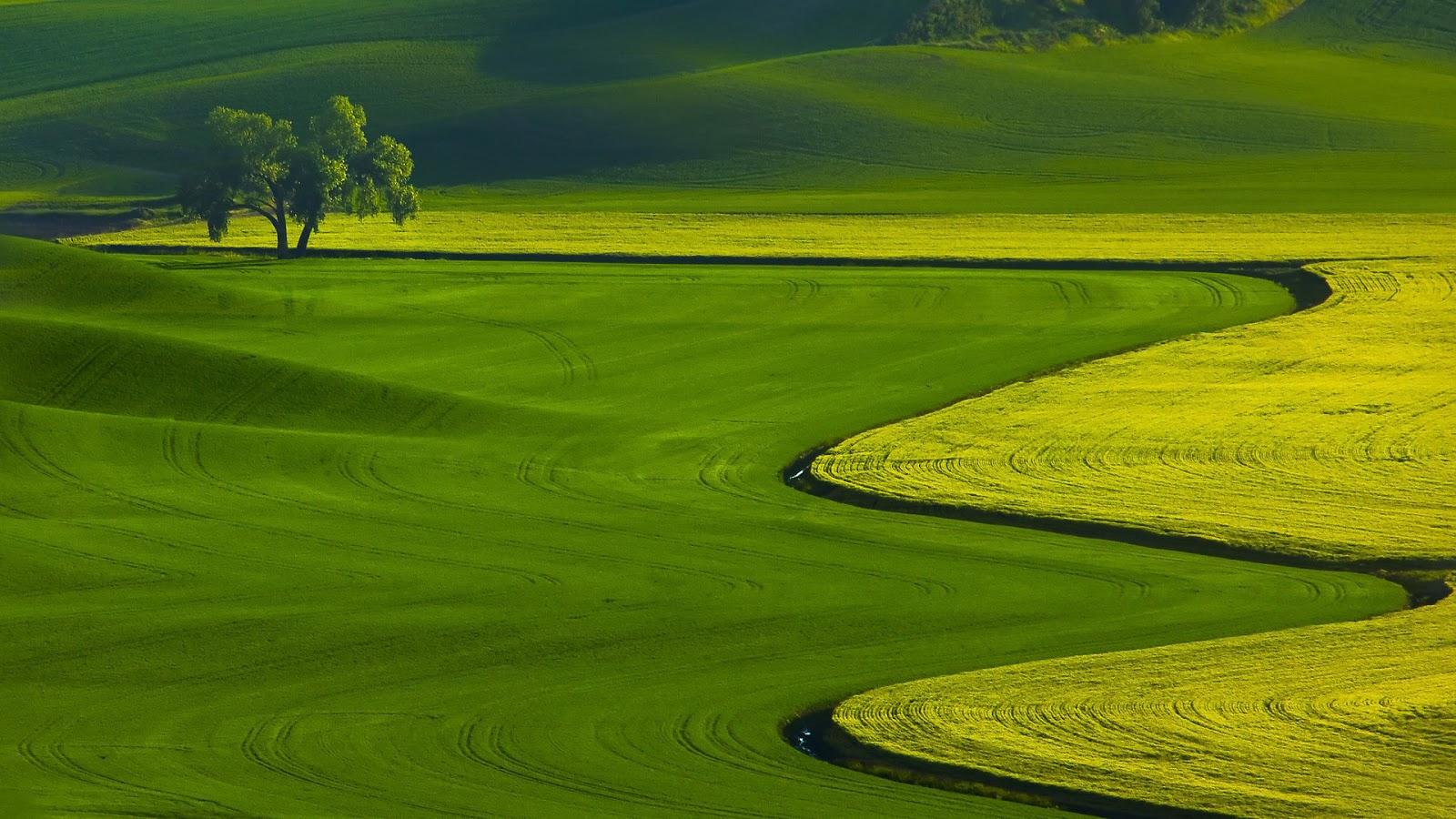 agriculture-widescreen-wallpaper