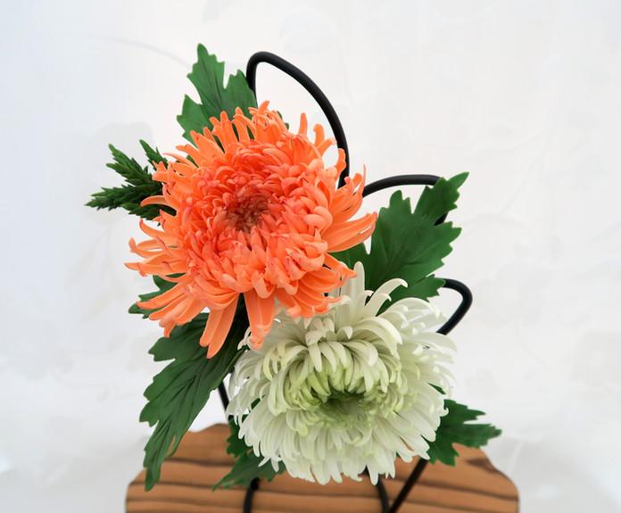 Sugar Chrysanthemum