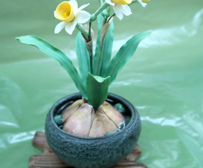 水仙花盆栽