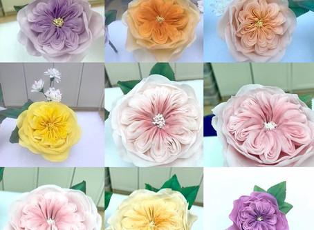 適合香港氣候的Rice Paste Flowers