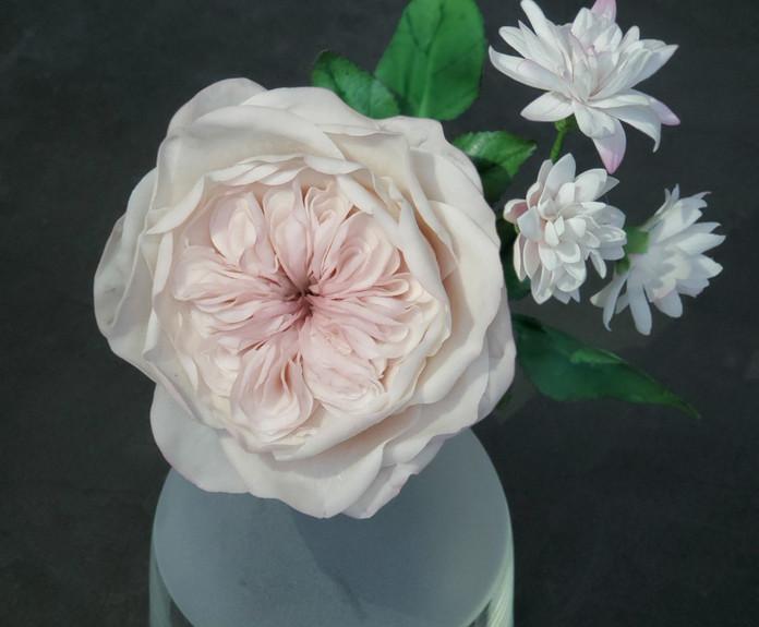 米糖皮奧斯汀玫瑰