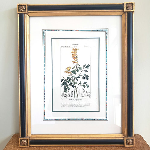 "Aquilegia Print - Botanical Illustration Fumarice Matted Framed 12""x16"""