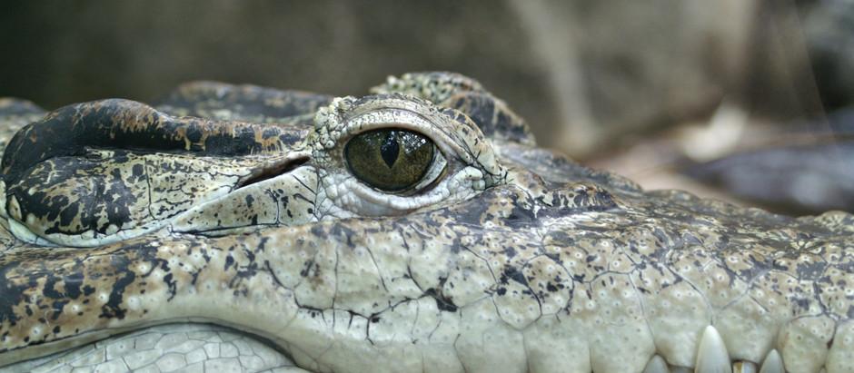 Man From Gator Land