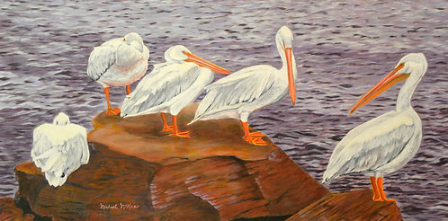 """Galveston Pelicans"""
