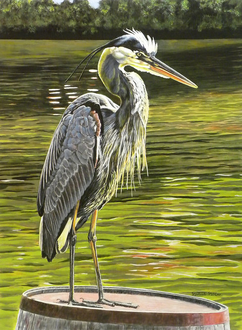 """Sunning / Great Blue Heron"""