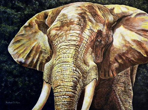 """African Elephant"""