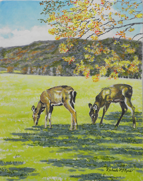 """""""Whitetail Deer at Cades Cove"""""""