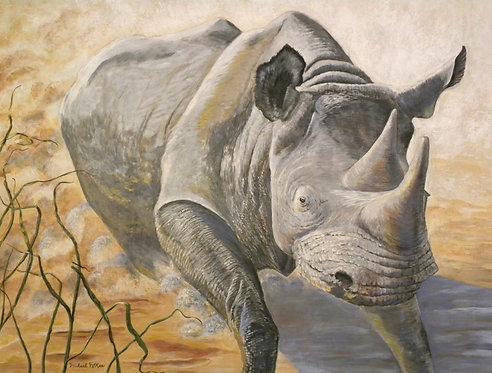 """""""Charging Rhino"""""""