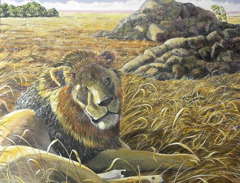 """Serengeti Evening / African Lion"""