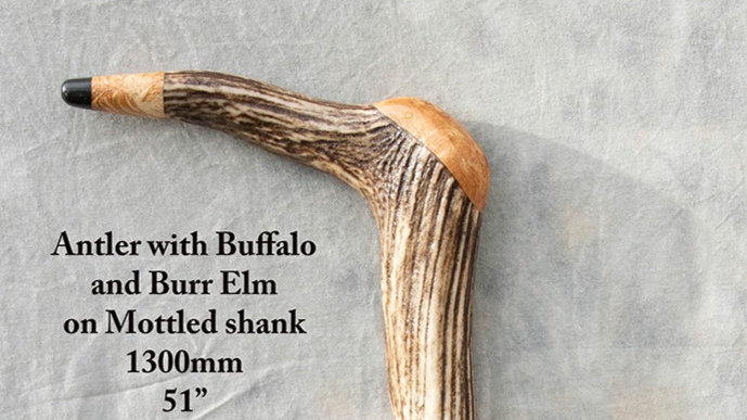 Stick 41 - Antler with buffalo and burr elm on a mottled shank