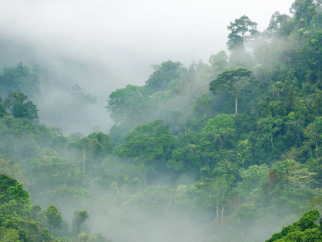 DWI Endorses The Faith For Forests Declaration