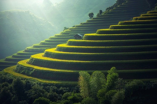 rice-plantation-1822444_640