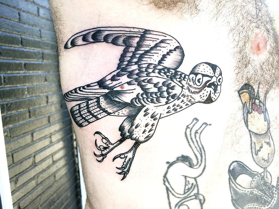 Tatt Hawk, Roman_edited.jpg