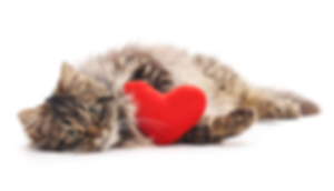 Cat-with-Heart.png