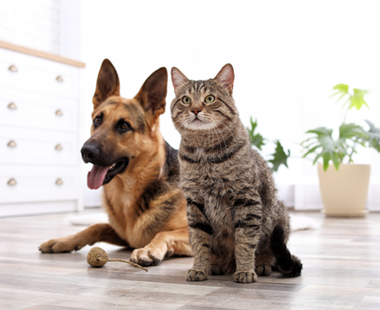 409x333_Dog_and_Cat.png