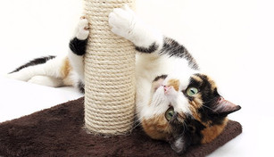 calico-cat-scratching-post.jpg