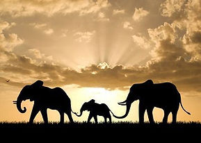 Elephant Family APTA Photos.jpg