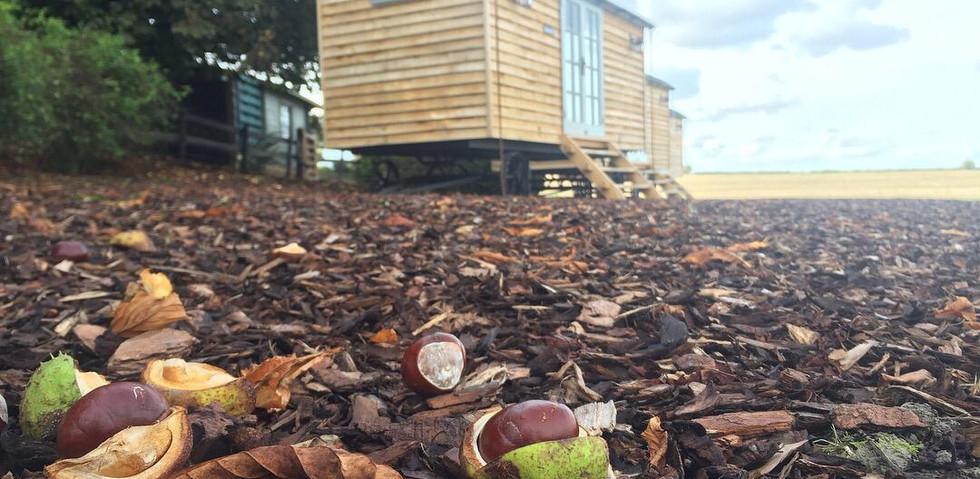 Autumn Shepherd's Hut