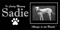 Pet grave stone Sadie