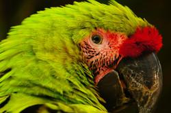 Macaw's Moutain,Honduras