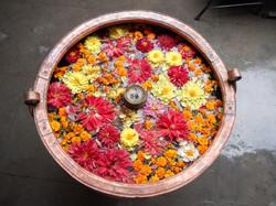 fleurs du Nepal