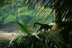 Manuel Antonio reserve,Costa Rica