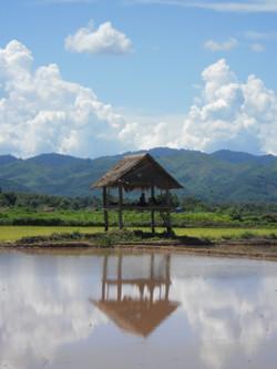 la campagne laotienne